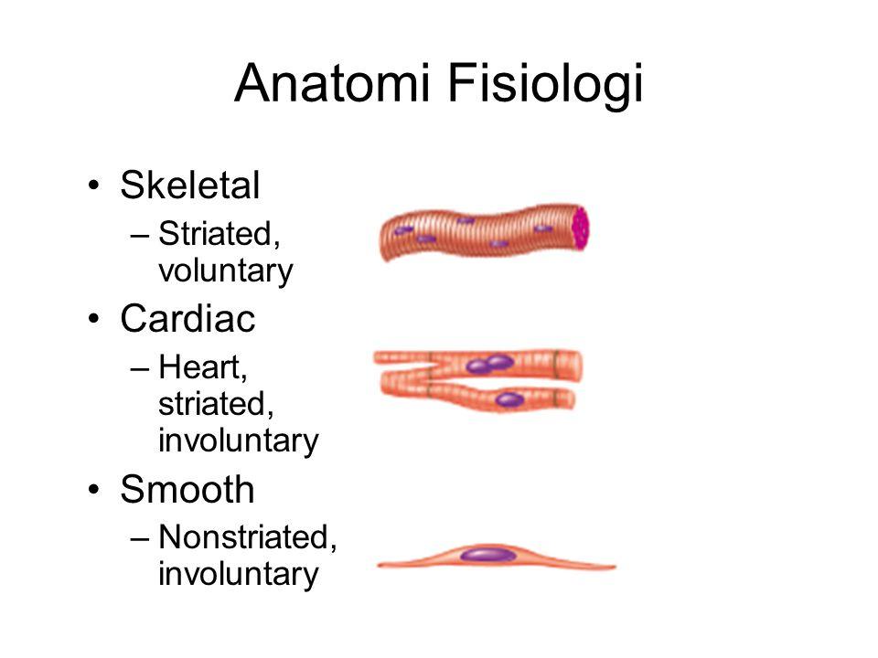Anatomi Fisiologi Skeletal Cardiac Smooth Striated, voluntary