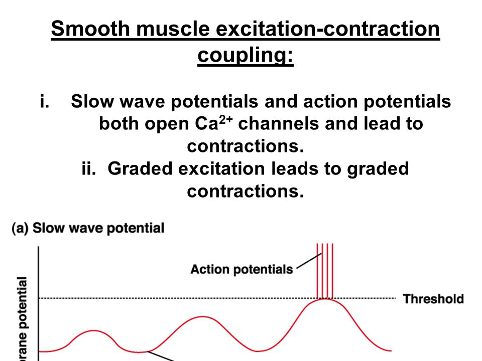 Smooth muscle excitation-contraction coupling:
