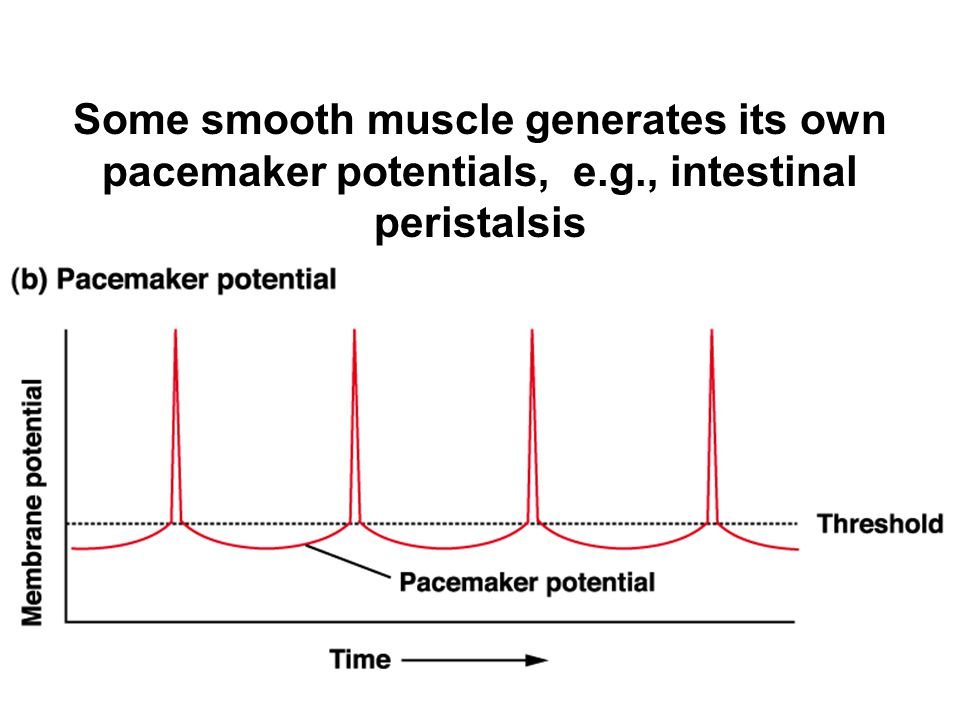 Some smooth muscle generates its own
