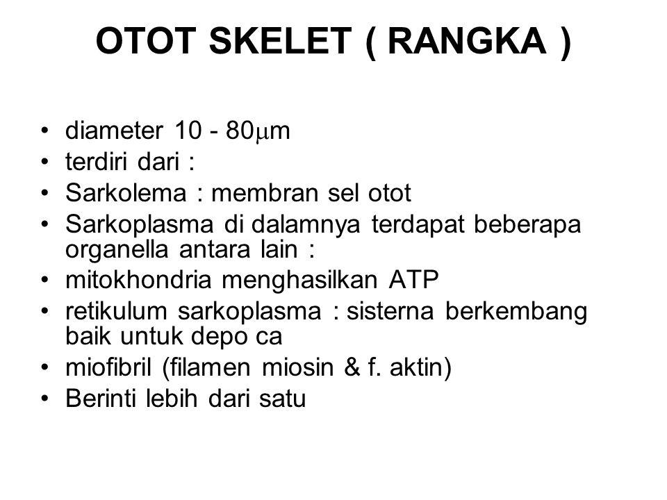 OTOT SKELET ( RANGKA ) diameter 10 - 80m terdiri dari :