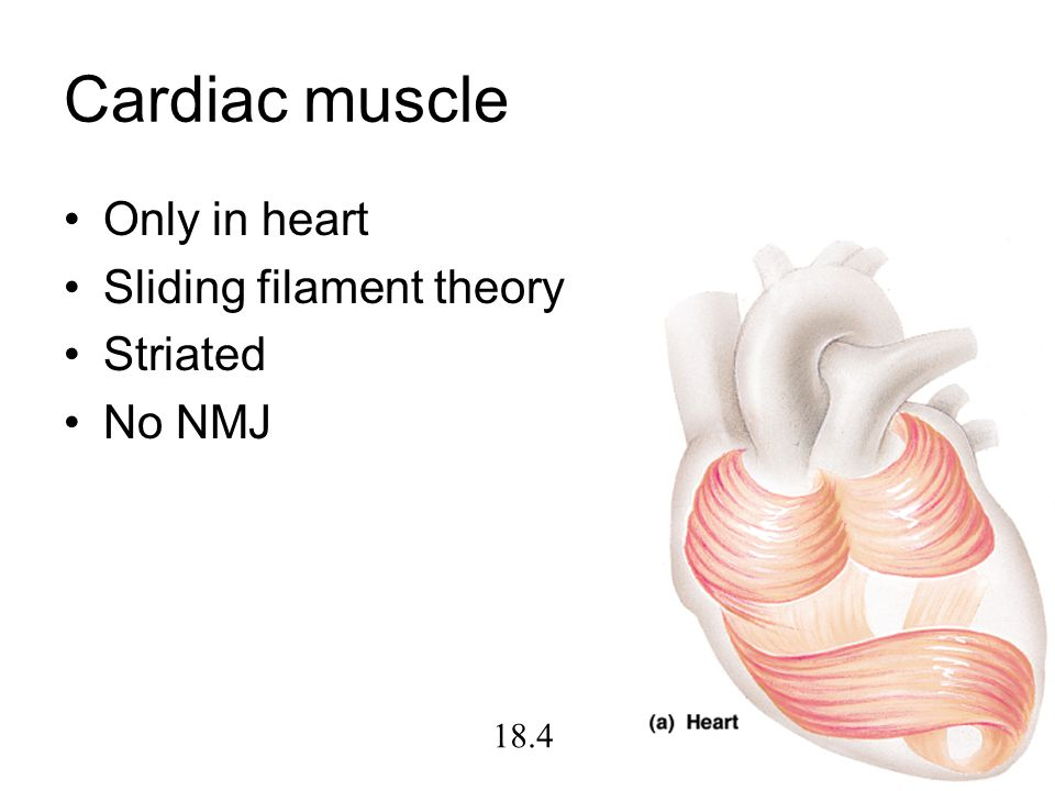 Cardiac muscle Only in heart Sliding filament theory Striated No NMJ