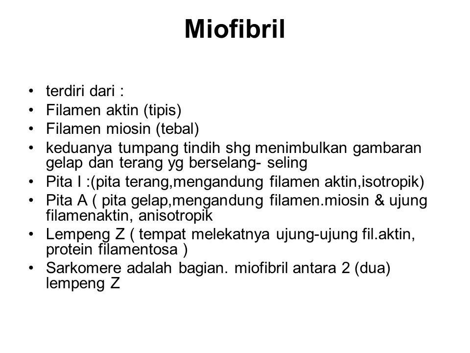 Miofibril terdiri dari : Filamen aktin (tipis) Filamen miosin (tebal)
