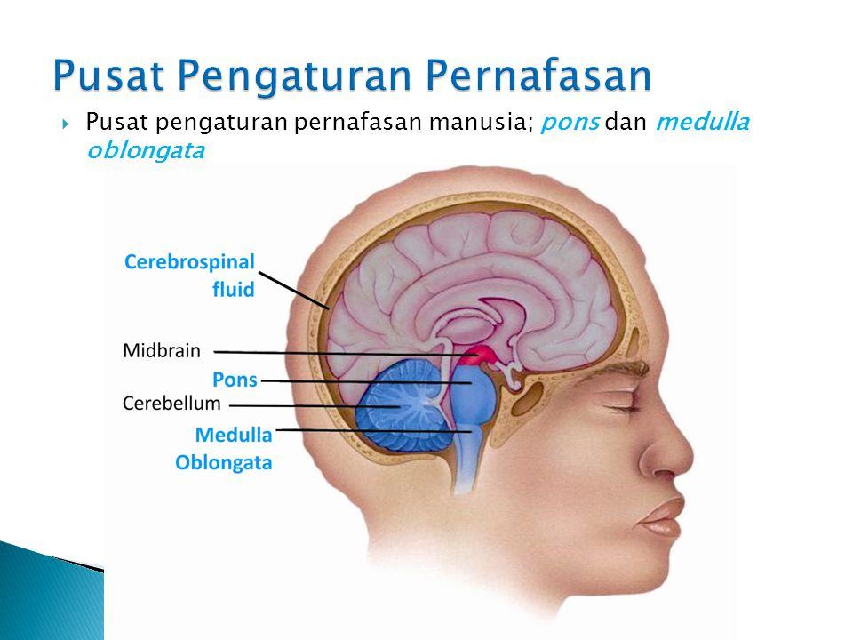Pusat Pengaturan Pernafasan