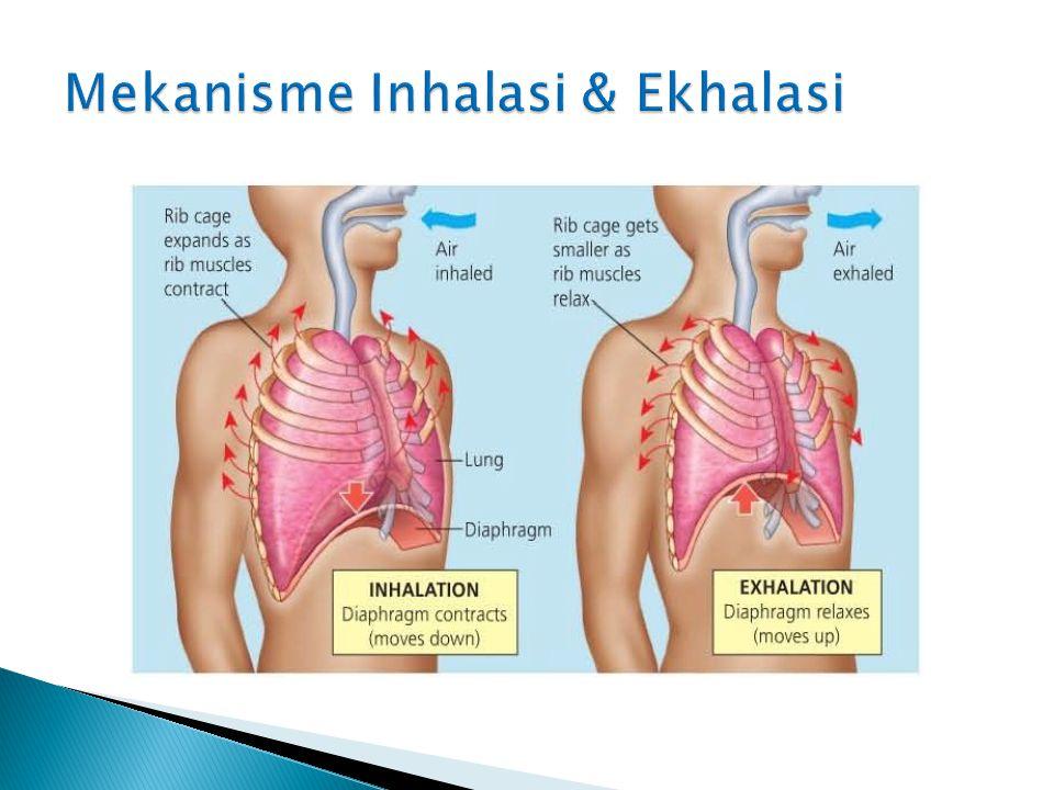 Mekanisme Inhalasi & Ekhalasi