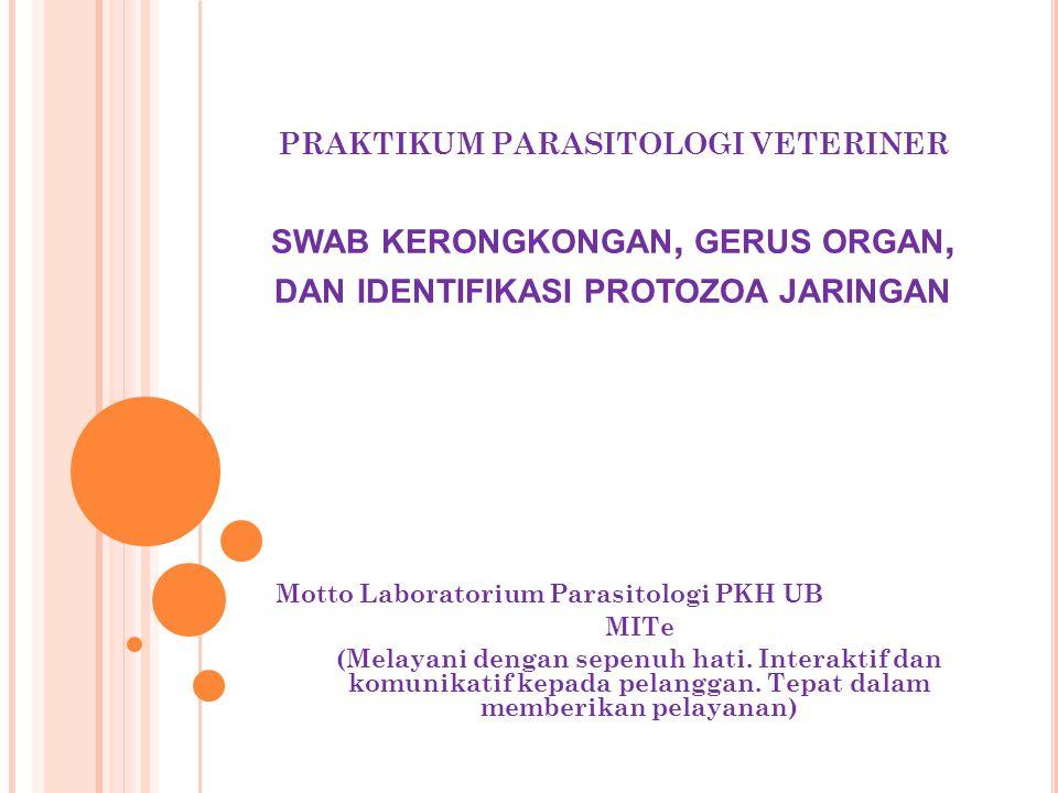 PRAKTIKUM PARASITOLOGI VETERINER swab kerongkongan, gerus organ, dan identifikasi protozoa jaringan