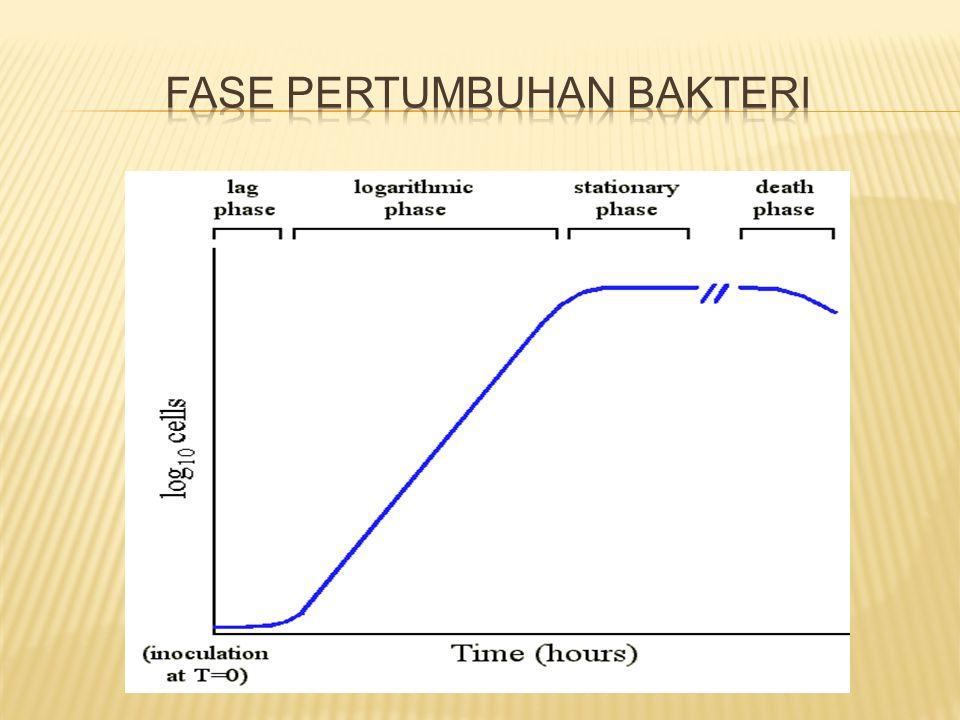 Fase pertumbuhan bakteri