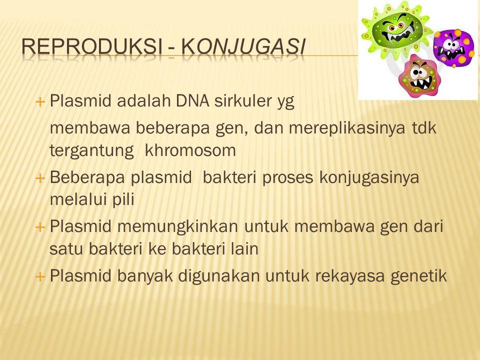 Reproduksi - Konjugasi