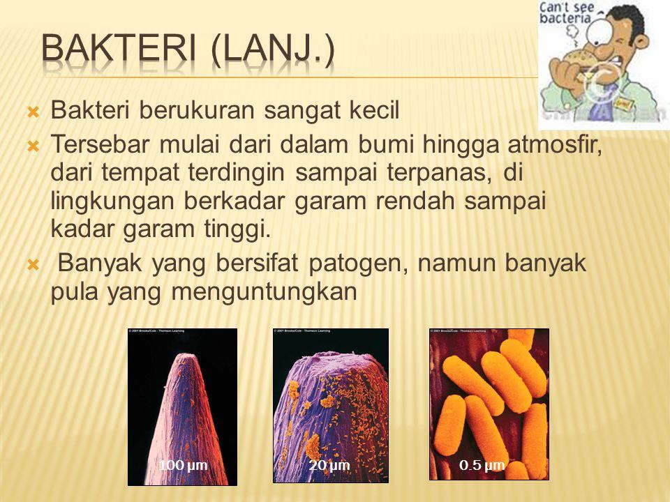 Bakteri (Lanj.) Bakteri berukuran sangat kecil