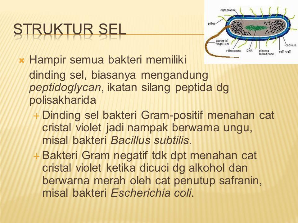 Struktur Sel Hampir semua bakteri memiliki