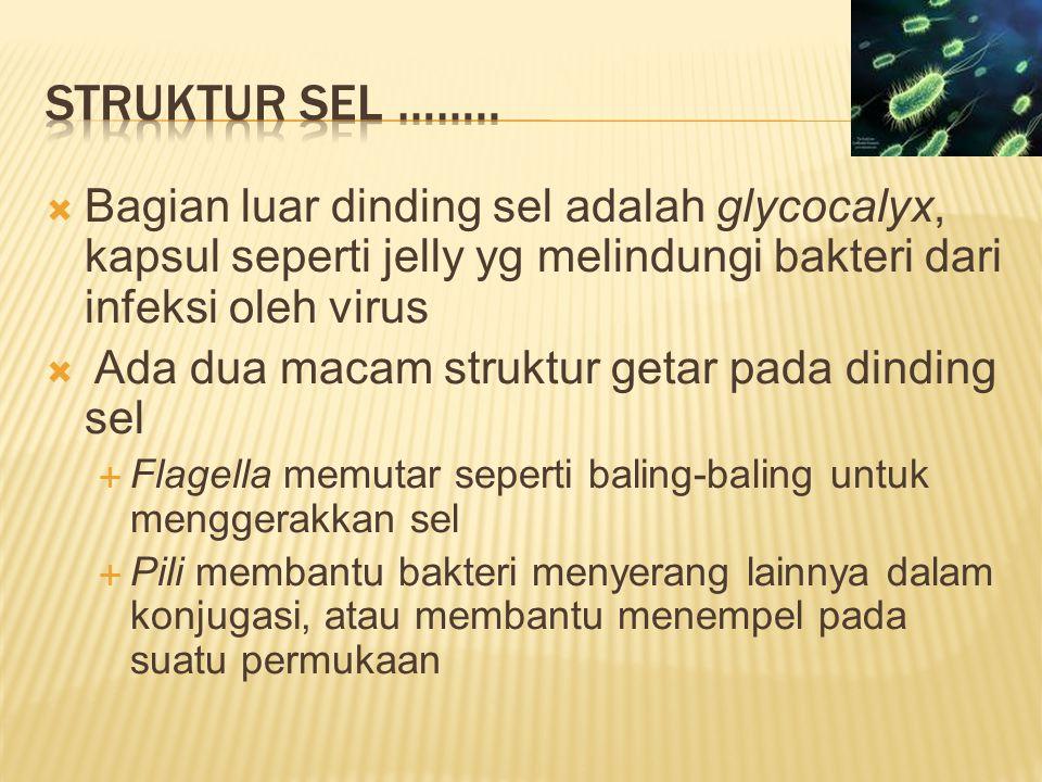 Struktur sel …….. Bagian luar dinding sel adalah glycocalyx, kapsul seperti jelly yg melindungi bakteri dari infeksi oleh virus.