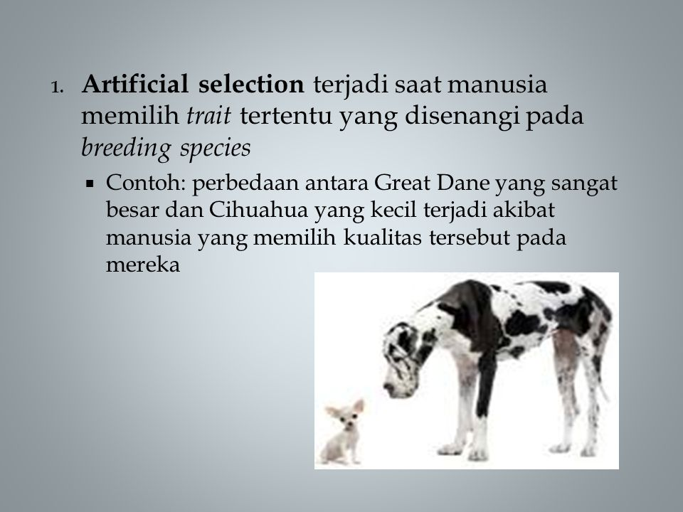 Artificial selection terjadi saat manusia memilih trait tertentu yang disenangi pada breeding species