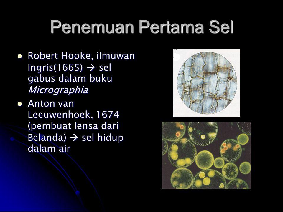 Penemuan Pertama Sel Robert Hooke, ilmuwan Ingris(1665)  sel gabus dalam buku Micrographia.