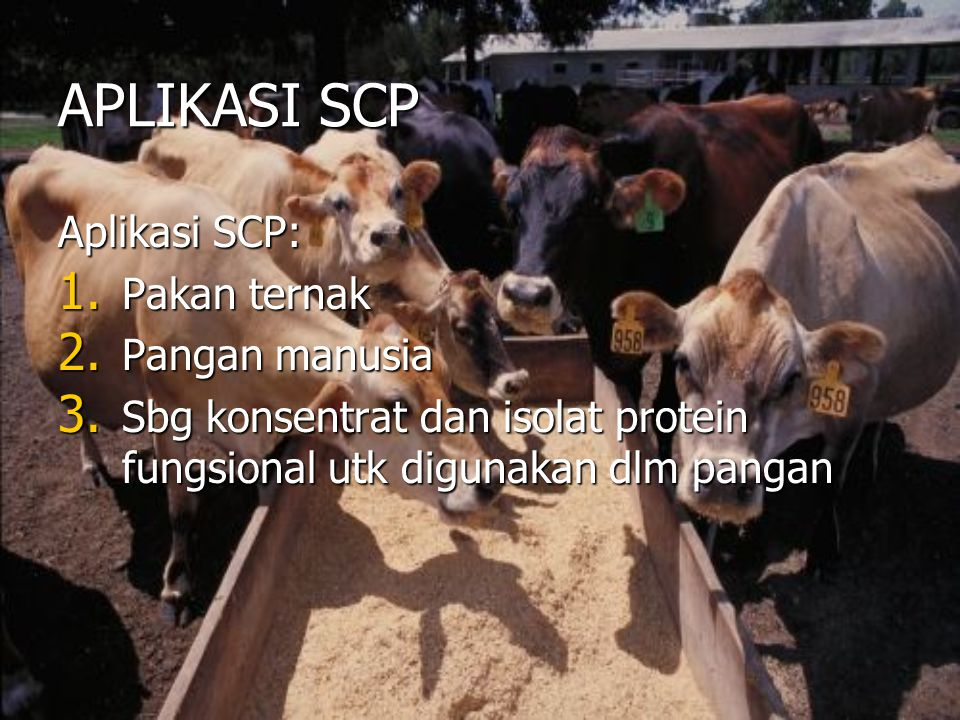 APLIKASI SCP Aplikasi SCP: Pakan ternak Pangan manusia