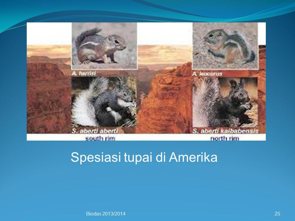 Spesiasi tupai di Amerika