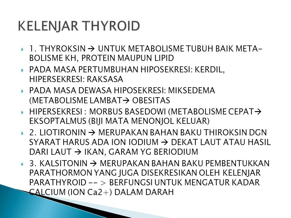KELENJAR THYROID 1. THYROKSIN  UNTUK METABOLISME TUBUH BAIK META- BOLISME KH, PROTEIN MAUPUN LIPID.