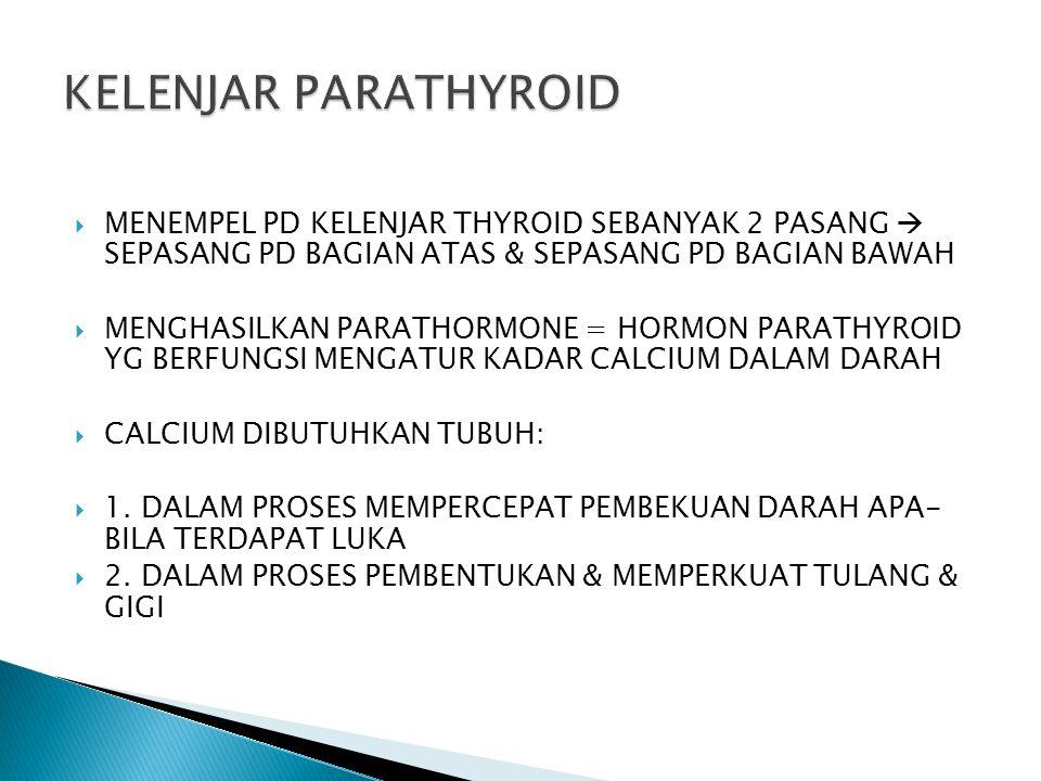 KELENJAR PARATHYROID MENEMPEL PD KELENJAR THYROID SEBANYAK 2 PASANG  SEPASANG PD BAGIAN ATAS & SEPASANG PD BAGIAN BAWAH.