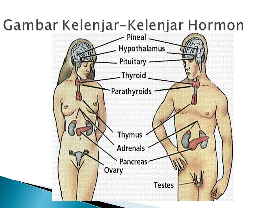 Gambar Kelenjar-Kelenjar Hormon