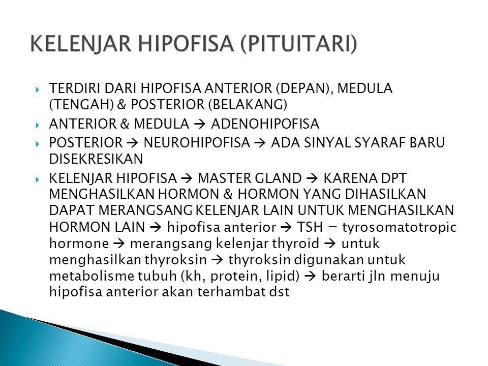 KELENJAR HIPOFISA (PITUITARI)