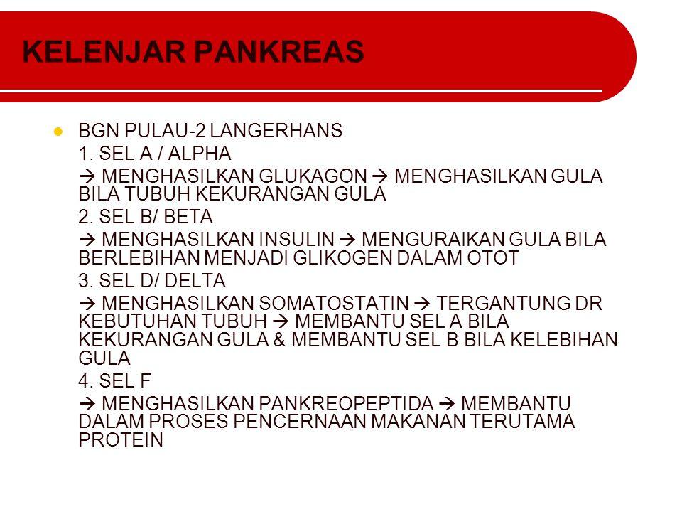 KELENJAR PANKREAS BGN PULAU-2 LANGERHANS 1. SEL A / ALPHA