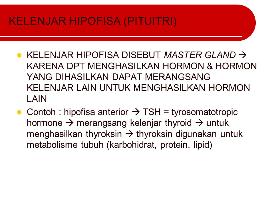 KELENJAR HIPOFISA (PITUITRI)