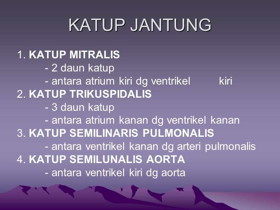 KATUP JANTUNG 1. KATUP MITRALIS - 2 daun katup