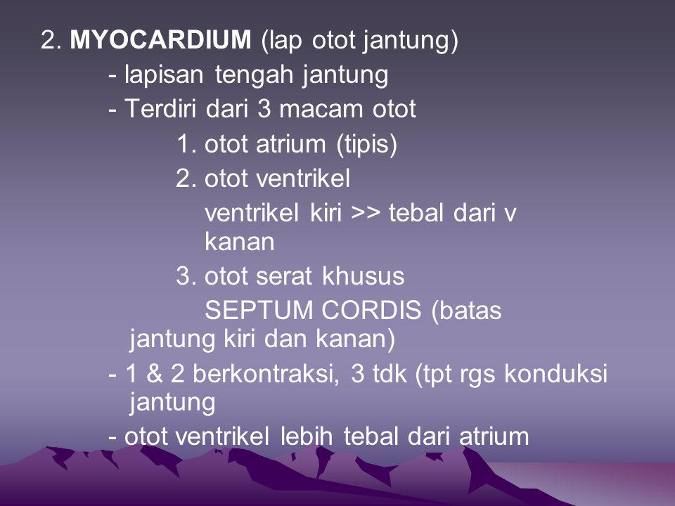 2. MYOCARDIUM (lap otot jantung)