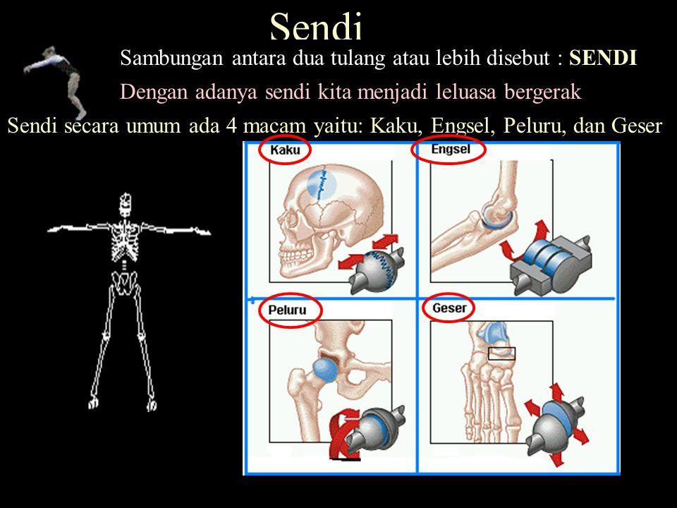 Sendi Sambungan antara dua tulang atau lebih disebut : SENDI