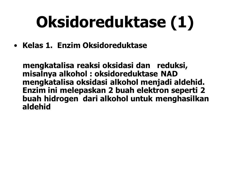 Oksidoreduktase (1) Kelas 1. Enzim Oksidoreduktase