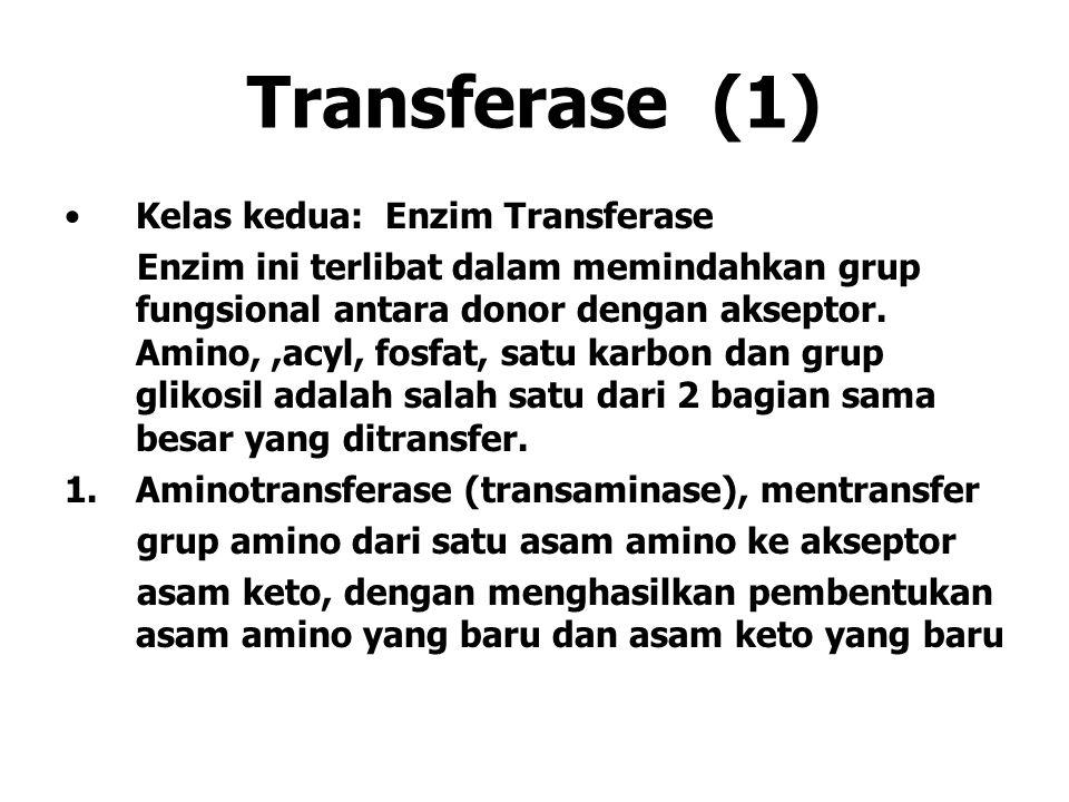 Transferase (1) Kelas kedua: Enzim Transferase