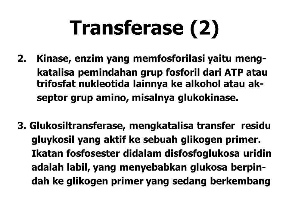 Transferase (2) Kinase, enzim yang memfosforilasi yaitu meng-