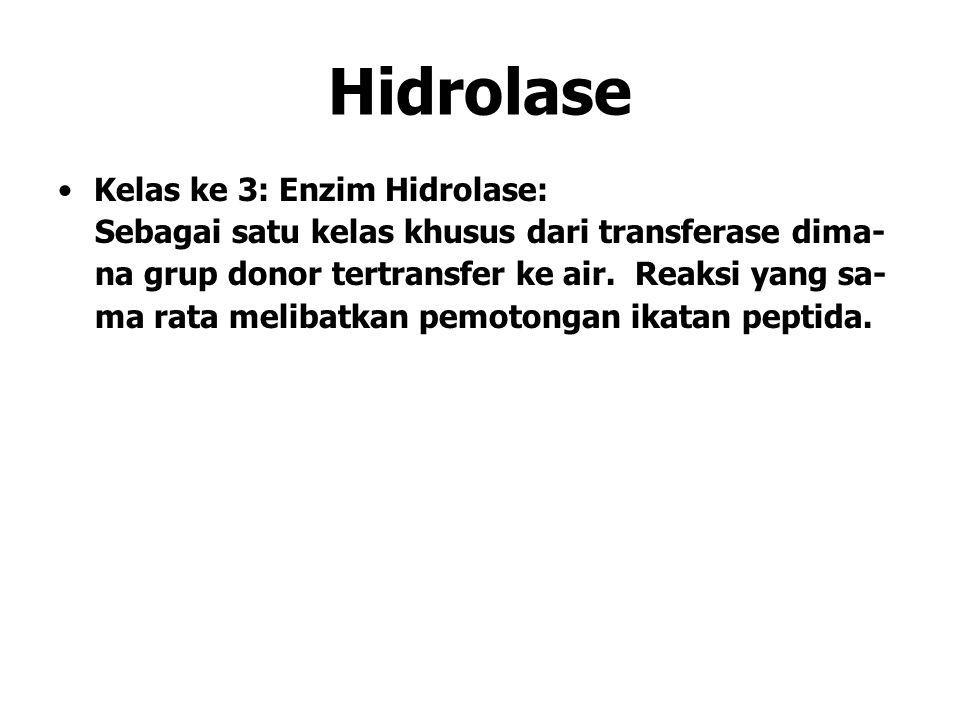 Hidrolase Kelas ke 3: Enzim Hidrolase: