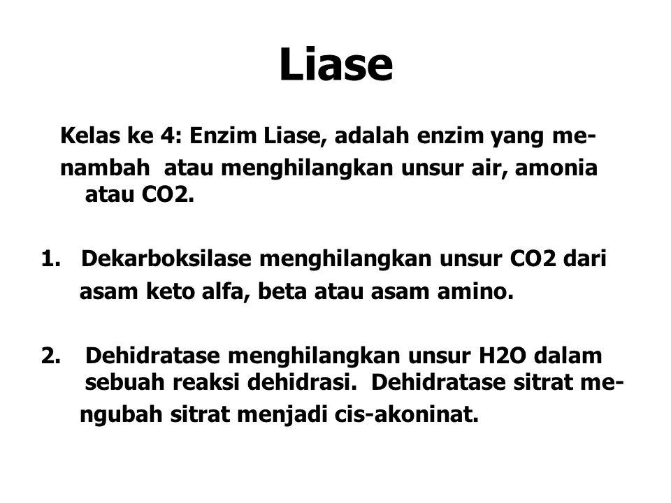 Liase Kelas ke 4: Enzim Liase, adalah enzim yang me-