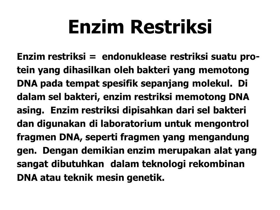 Enzim Restriksi Enzim restriksi = endonuklease restriksi suatu pro-