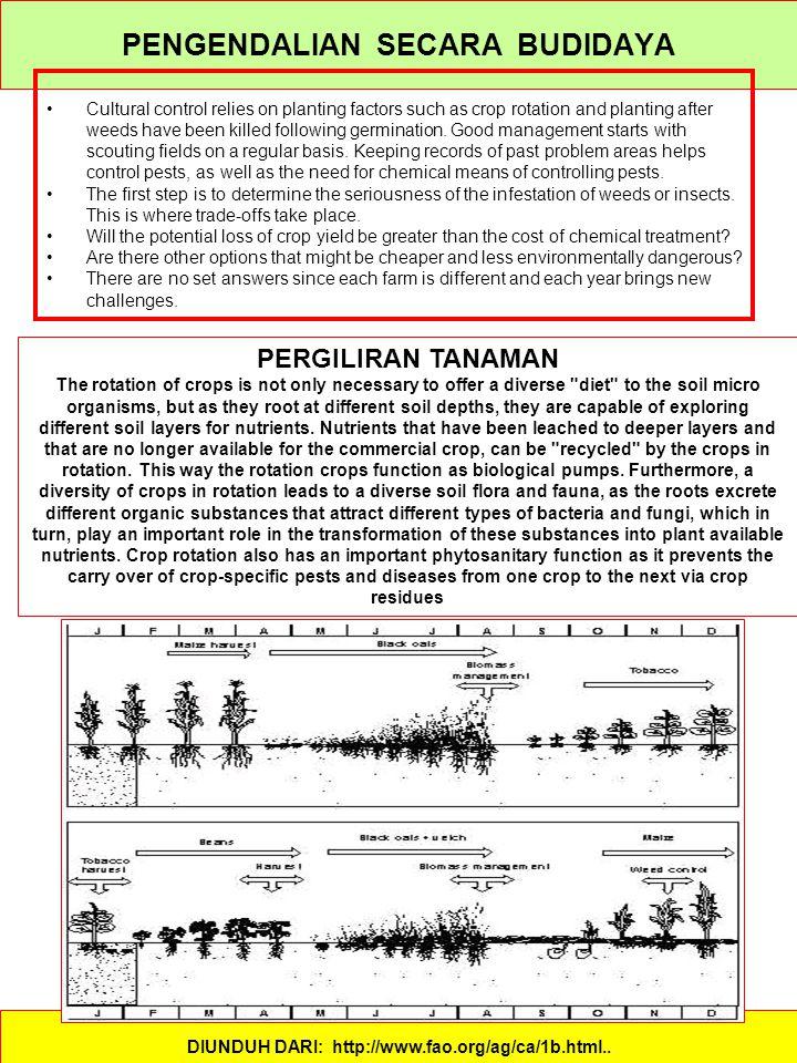 PENGENDALIAN SECARA BUDIDAYA