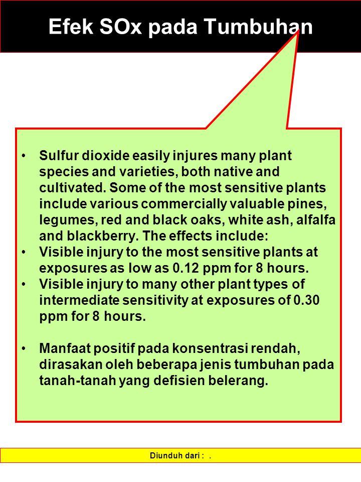 Efek SOx pada Tumbuhan