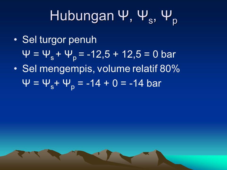 Hubungan Ψ, Ψs, Ψp Sel turgor penuh Ψ = Ψs + Ψp = -12,5 + 12,5 = 0 bar
