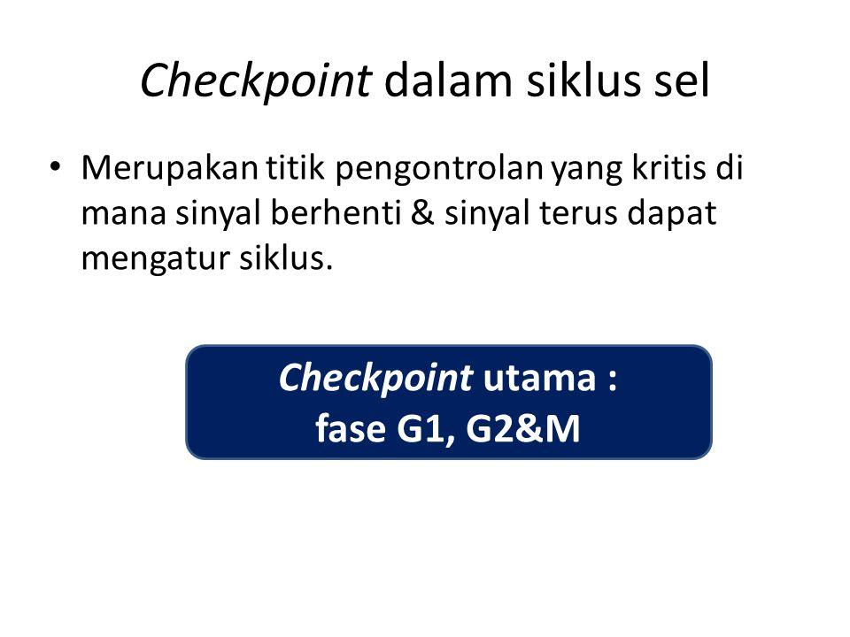 Checkpoint dalam siklus sel