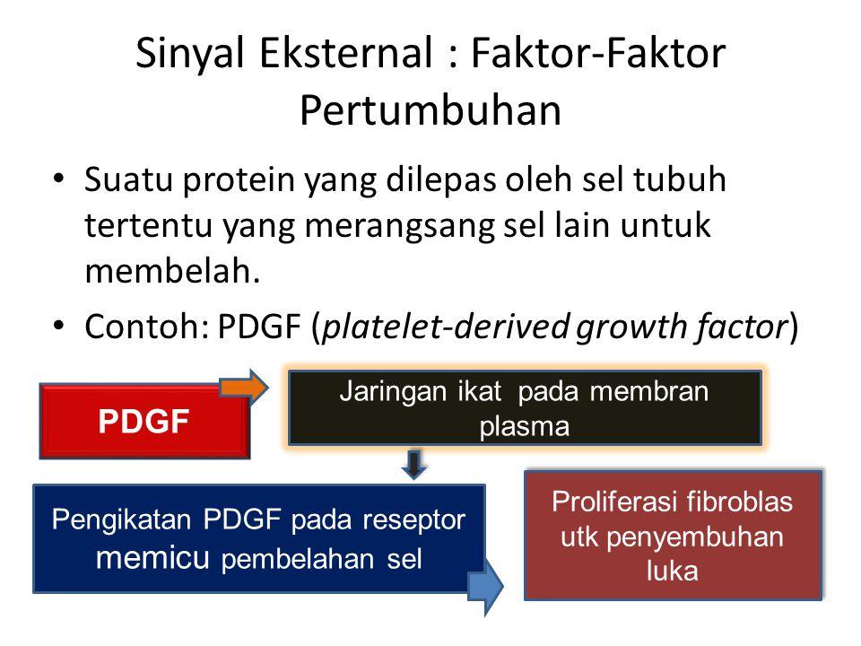 Sinyal Eksternal : Faktor-Faktor Pertumbuhan