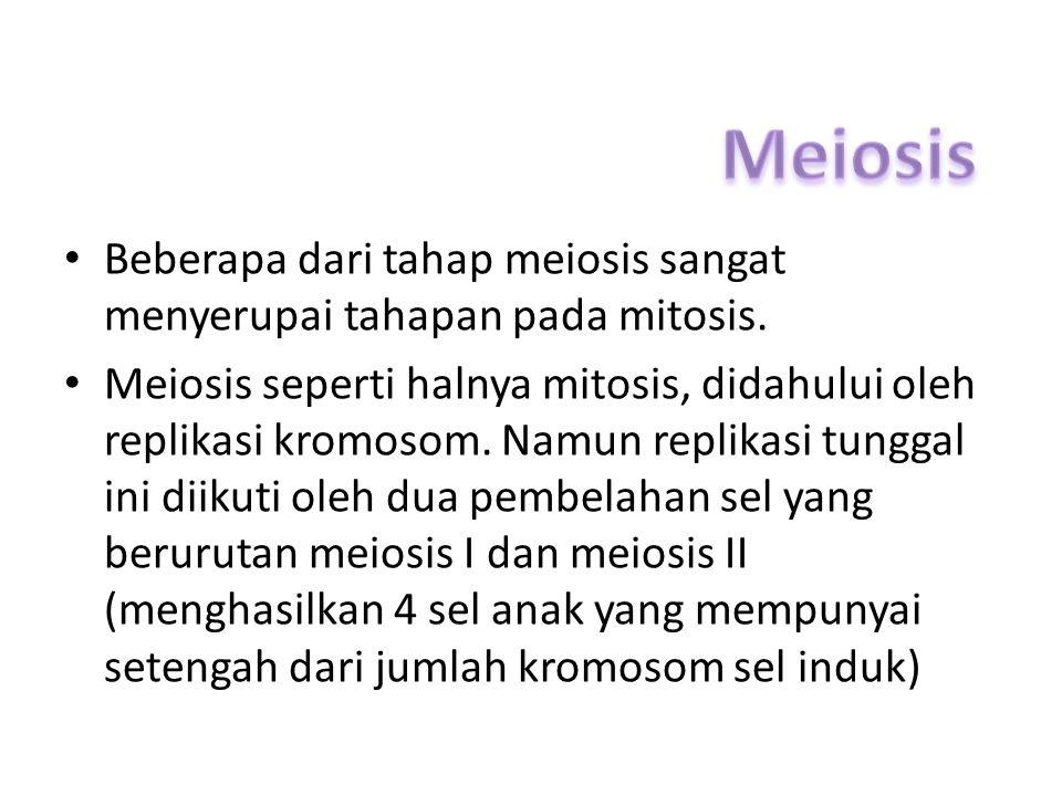 Meiosis Beberapa dari tahap meiosis sangat menyerupai tahapan pada mitosis.
