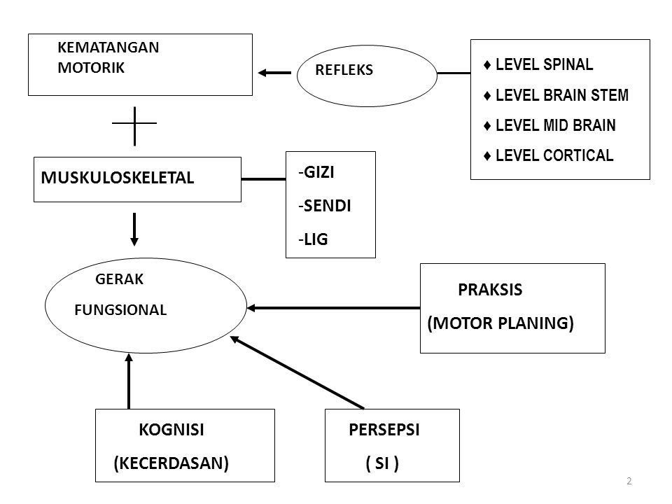 GIZI SENDI LIG MUSKULOSKELETAL GERAK (MOTOR PLANING) KOGNISI