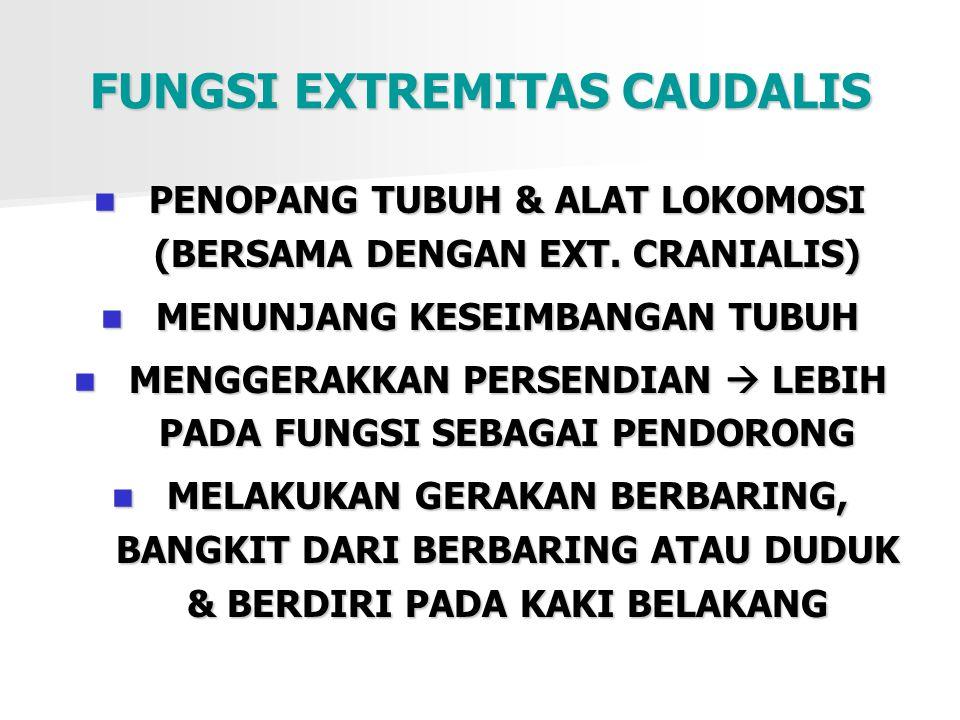 FUNGSI EXTREMITAS CAUDALIS