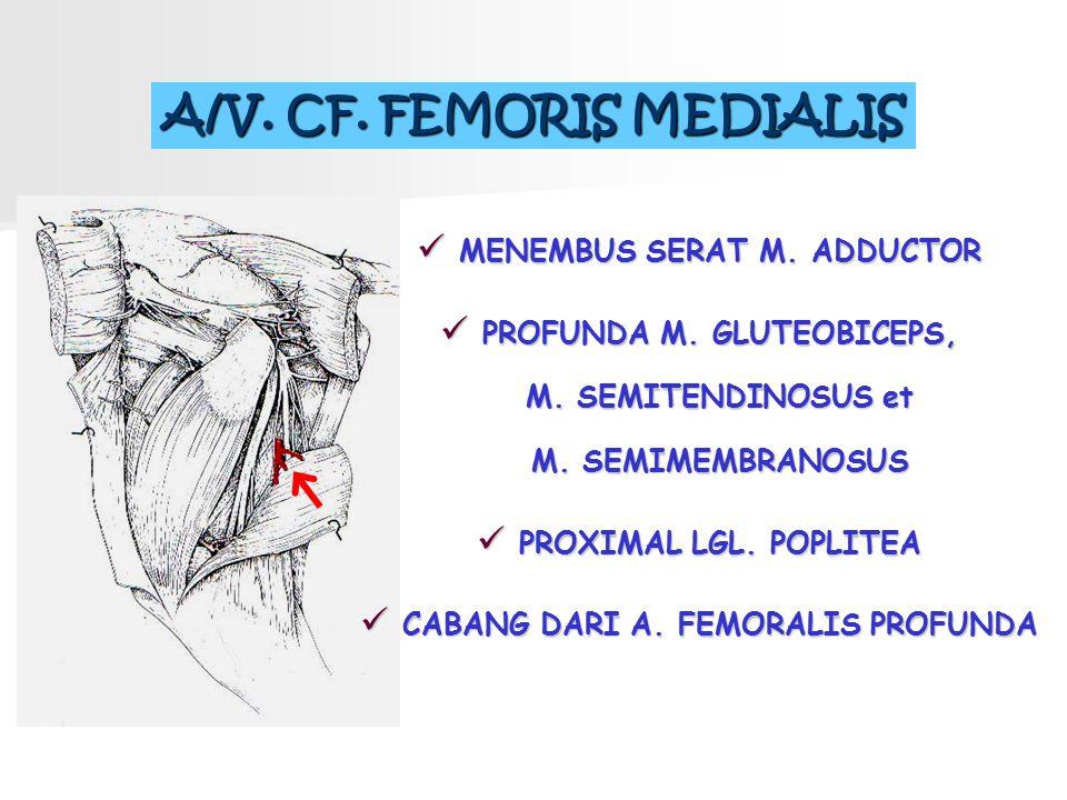 A/V. CF. FEMORIS MEDIALIS