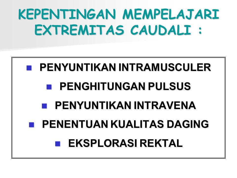 KEPENTINGAN MEMPELAJARI EXTREMITAS CAUDALI :