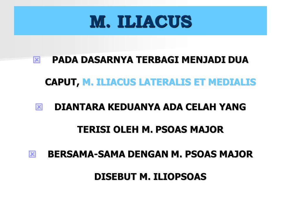 M. ILIACUS PADA DASARNYA TERBAGI MENJADI DUA CAPUT, M. ILIACUS LATERALIS ET MEDIALIS. DIANTARA KEDUANYA ADA CELAH YANG TERISI OLEH M. PSOAS MAJOR.