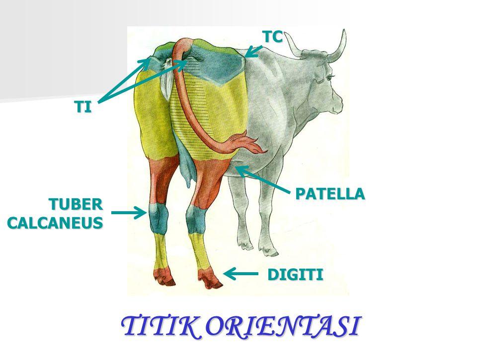 TC TI PATELLA TUBER CALCANEUS DIGITI TITIK ORIENTASI
