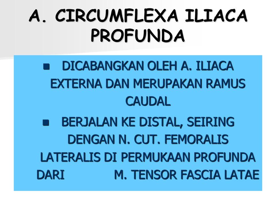 A. CIRCUMFLEXA ILIACA PROFUNDA