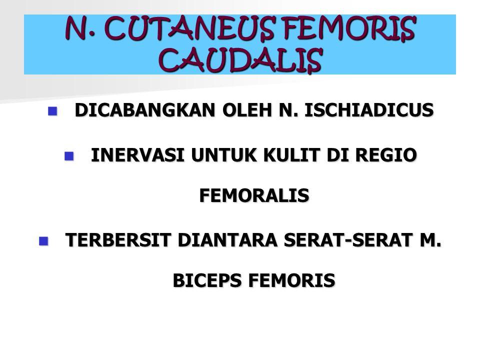 N. CUTANEUS FEMORIS CAUDALIS