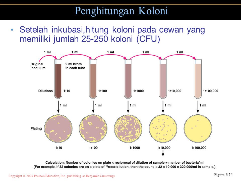 Penghitungan Koloni Setelah inkubasi,hitung koloni pada cewan yang memiliki jumlah 25-250 koloni (CFU)