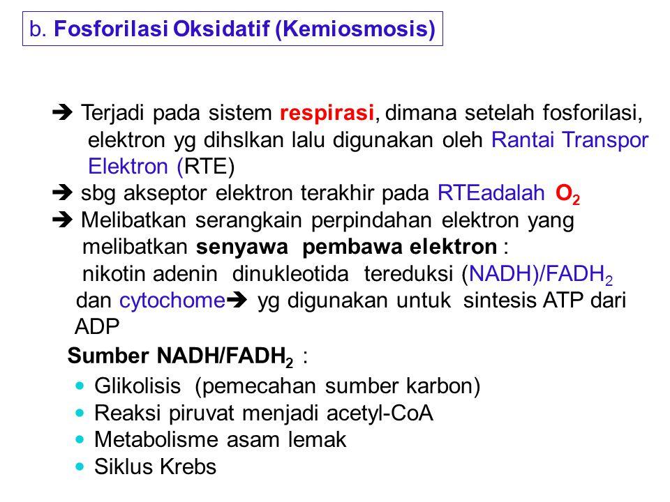 b. Fosforilasi Oksidatif (Kemiosmosis)