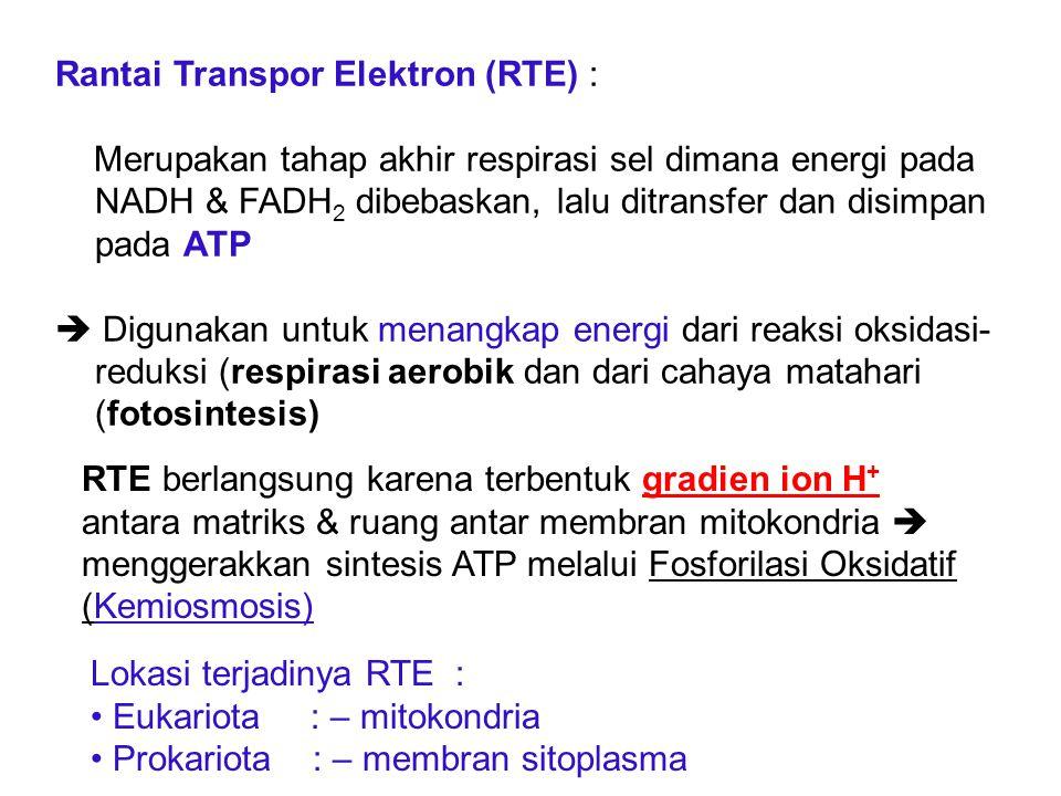 Rantai Transpor Elektron (RTE) :